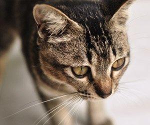 compulsao-gatos_interna