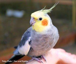 aves-arrancam-penas_interna